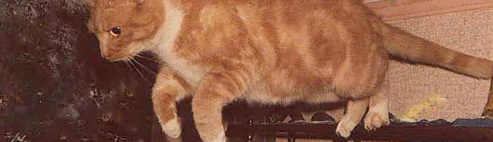Marmalade, Cat Detective